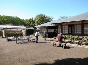 くらしの植物園(2016年5月4日)その2.jpg