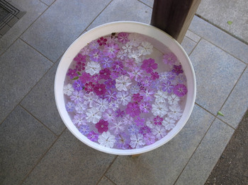 くらしの植物園(2016年5月4日)その6.jpg